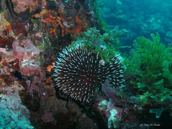 salento subacqueo
