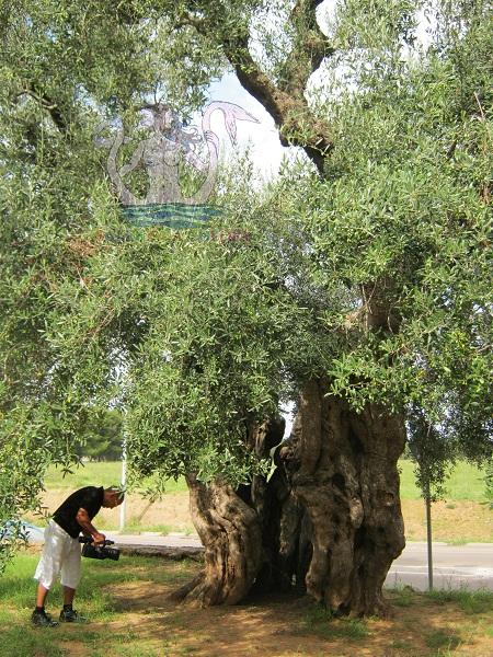 olivi giganti lizzanello