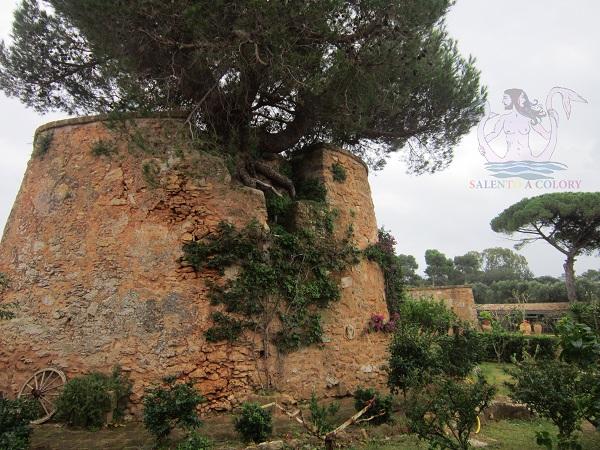 masseria provenzani, storia nelle campagne
