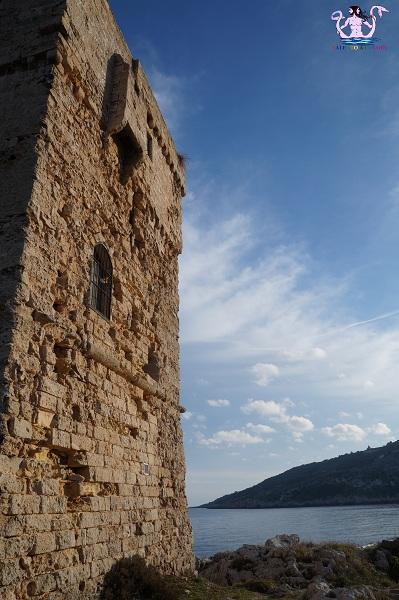torre palane 11