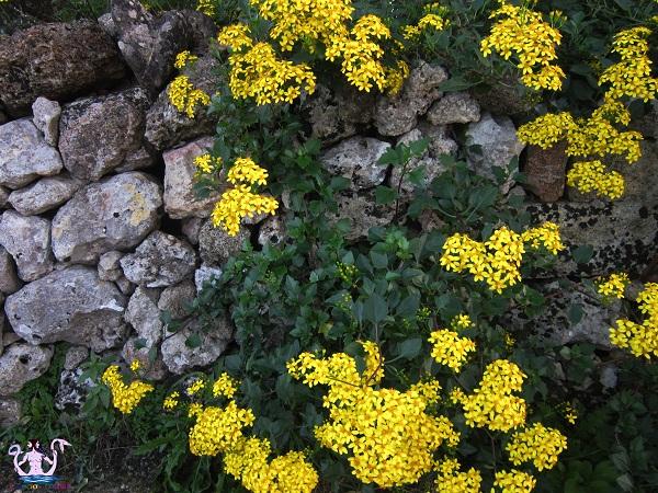 fiori e muro a secco