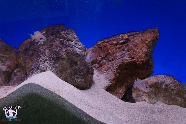 acquario del salento 1
