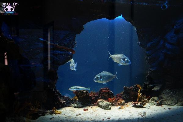 acquario del salento 11