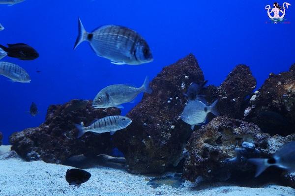 acquario del salento 13