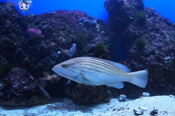 acquario del salento 15