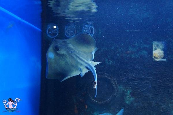 acquario del salento 24