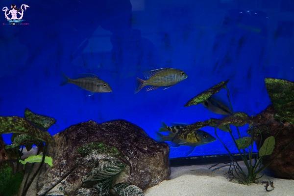 acquario del salento 3