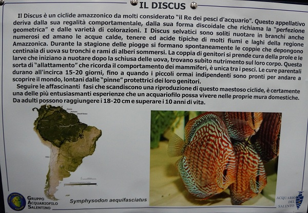 acquario del salento 6