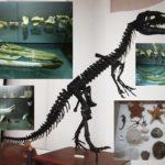 M.A.U.S. Il Museo dell'Ambiente