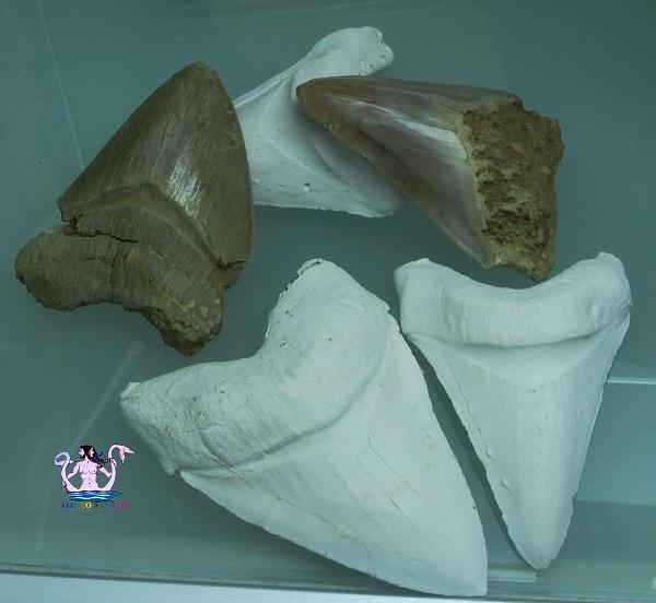 museo dell'ambiente 25