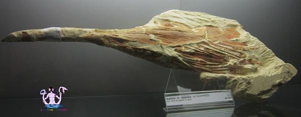 museo dell'ambiente 29
