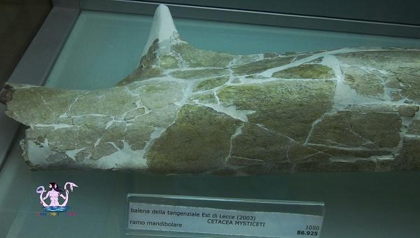 museo dell'ambiente 30