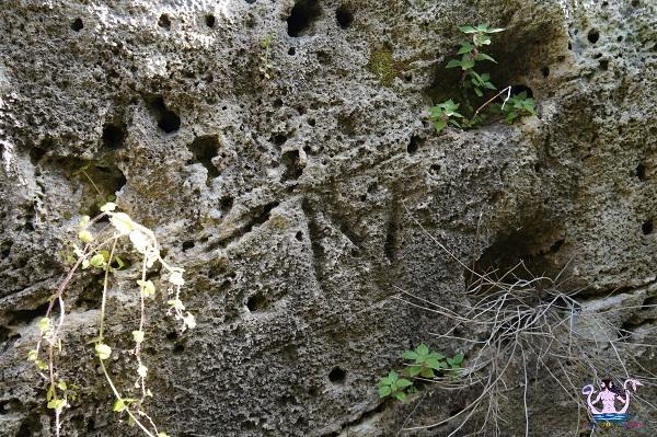 paesaggio rupestre di gallipoli 10