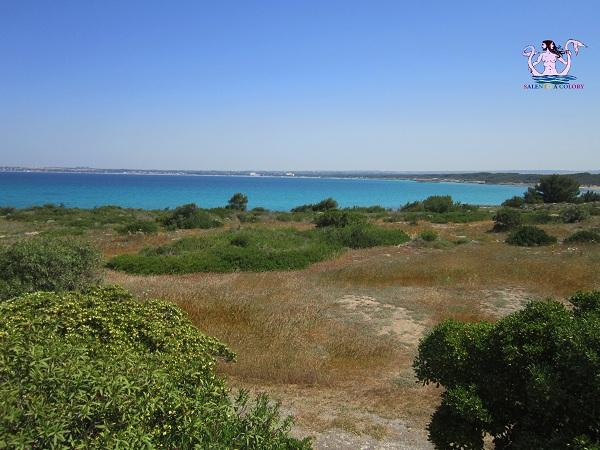 Parco naturale regionale Isola di Sant'Andrea e litorale di Punta Pizzo 6