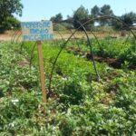 Apre il primo vivaio della biodiversità della Puglia