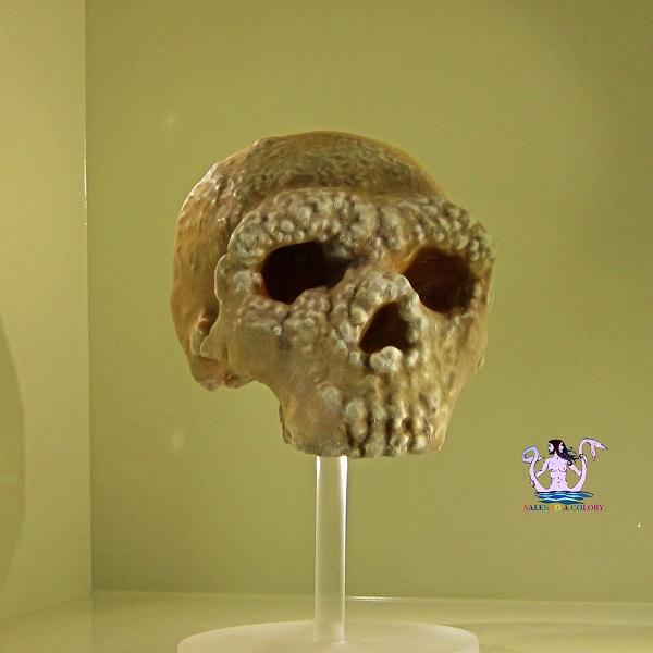 Il Museo Archeologico di Altamura