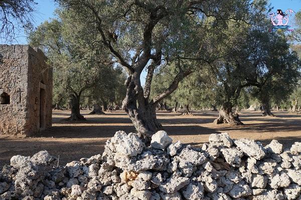 L'epigrafe nascosta fra gli olivi