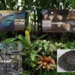 Il Museo di Storia Naturale del Salento