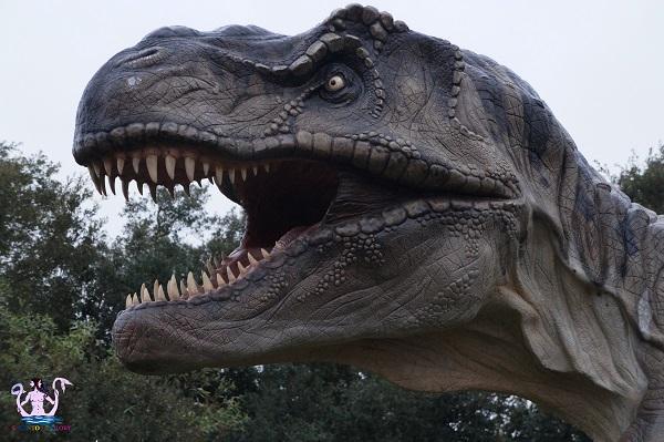 a spasso fra i dinosauri