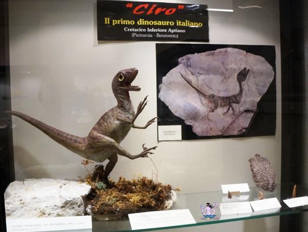 Ciro. Il Museo Civico della Paleontologia e dell'Uomo a Lizzano
