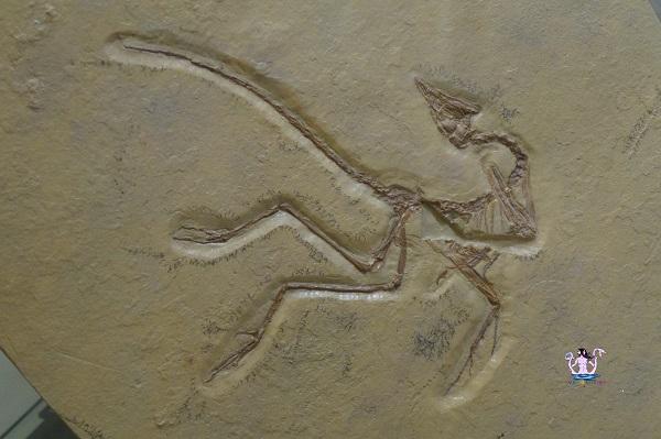 Il Museo della Paleontologia e dell'Uomo a Lizzano