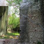 La foresta urbana di Lecce