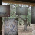 Memorie di un artista contadino